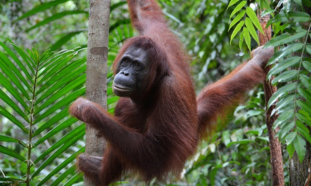 best places to see in borneo