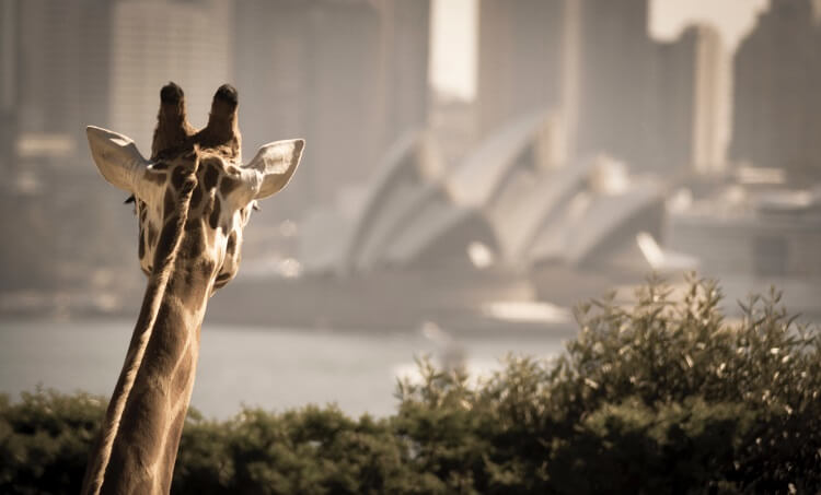 Sydney attractions