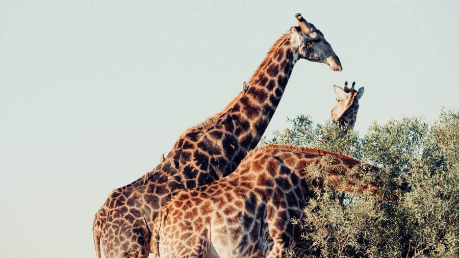 best things to do in south africa